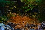 Les couleurs de l'automne